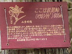 030524_07Douhyo_Sanple_Matuotouge.JPG